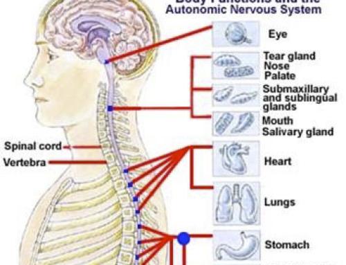 Dolor de espalda, un problema de origen visceral
